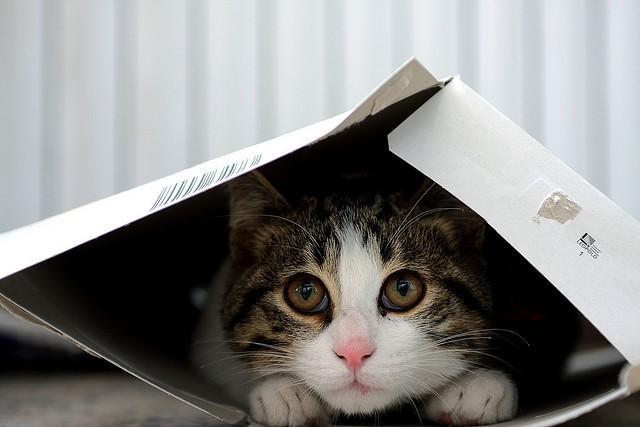 Cat in packaging