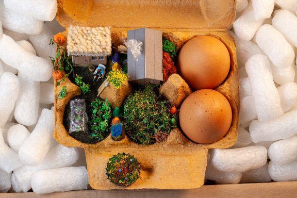 The Art of Sustainability Roy Tyson - Egg box